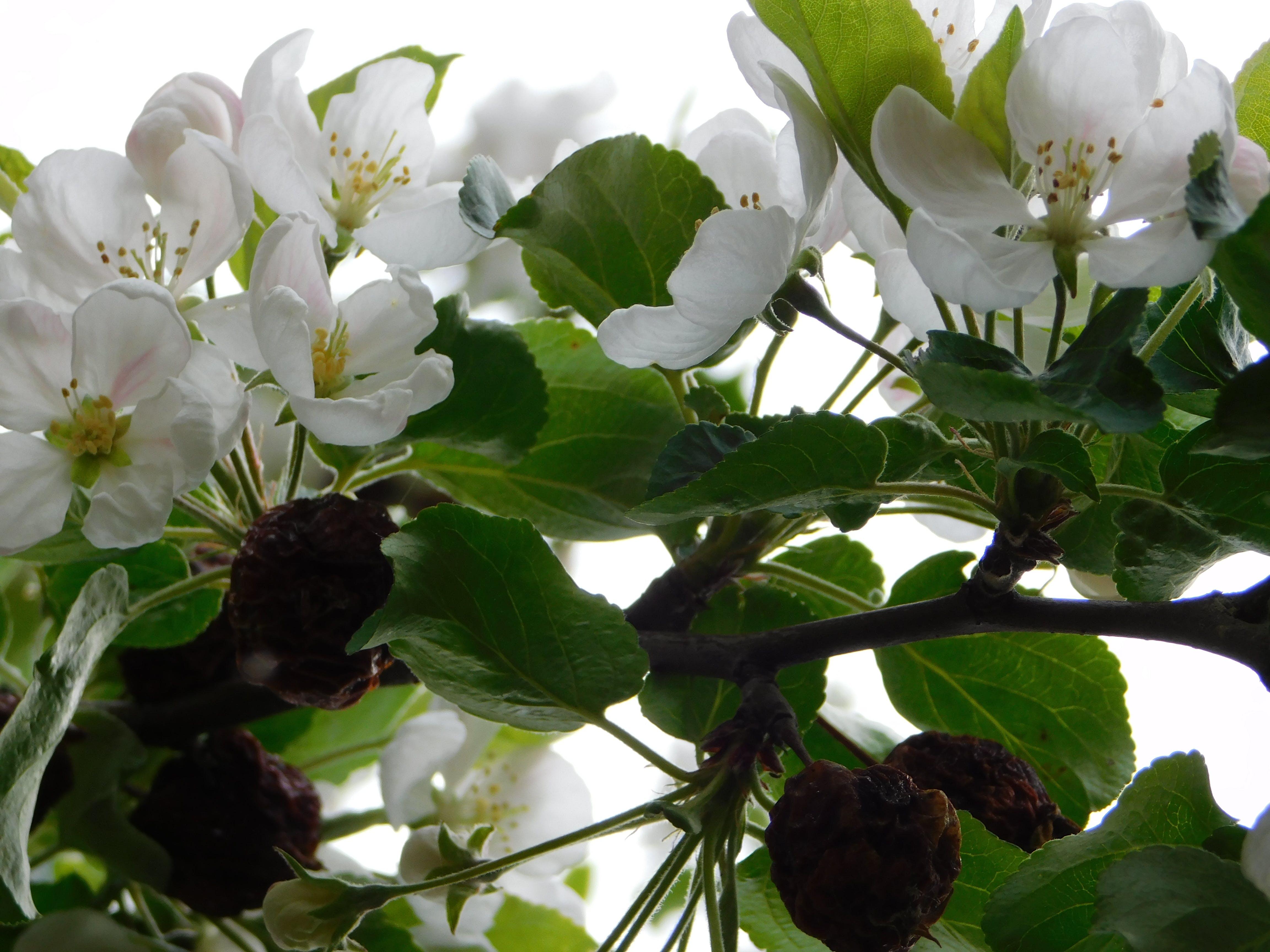 Foto stok gratis bunga-bunga indah