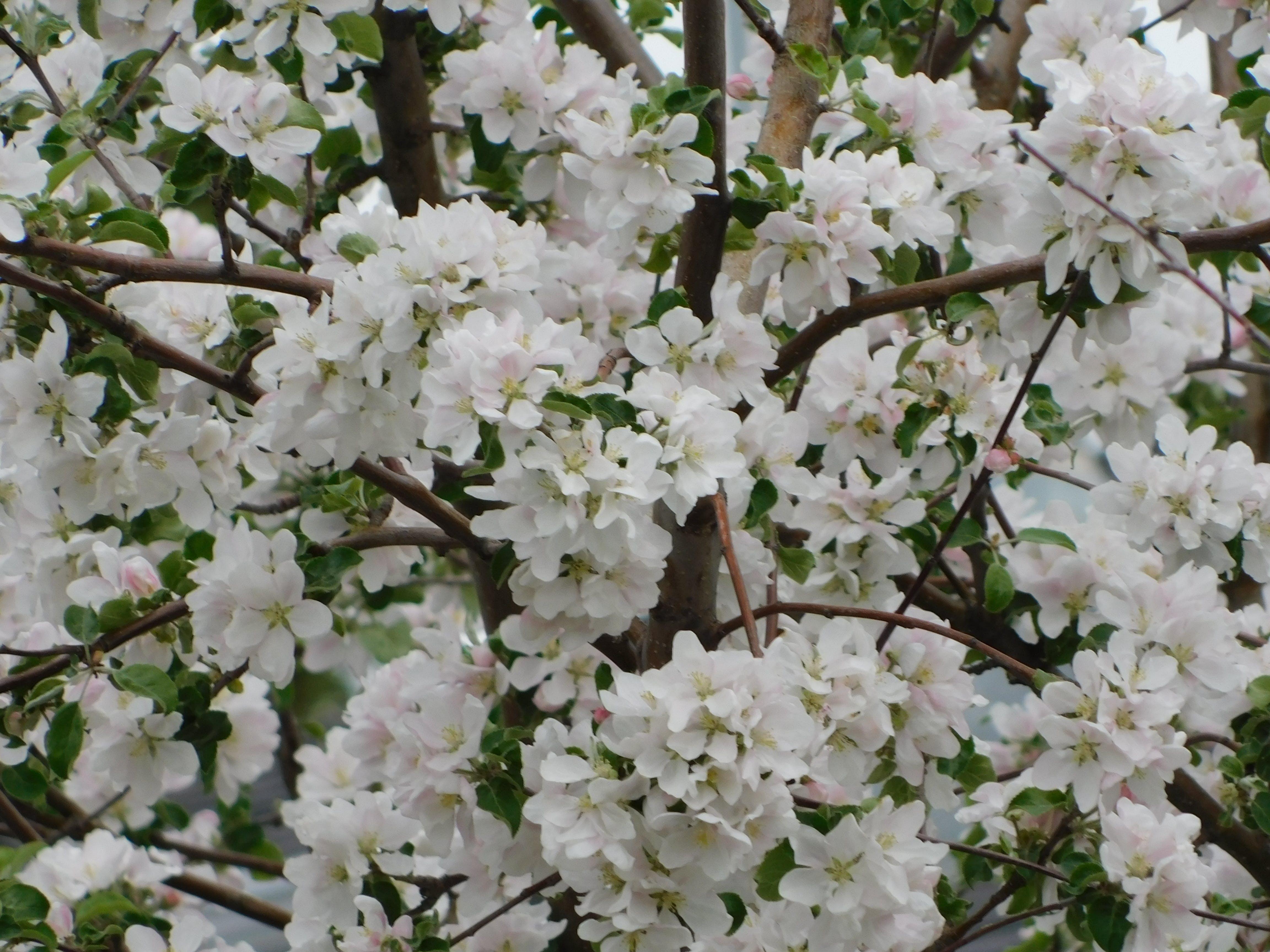 Fotos de stock gratuitas de más flores
