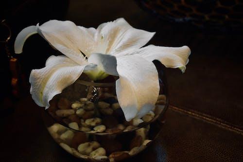 Fotos de stock gratuitas de blanco, dramático, flor, fondo