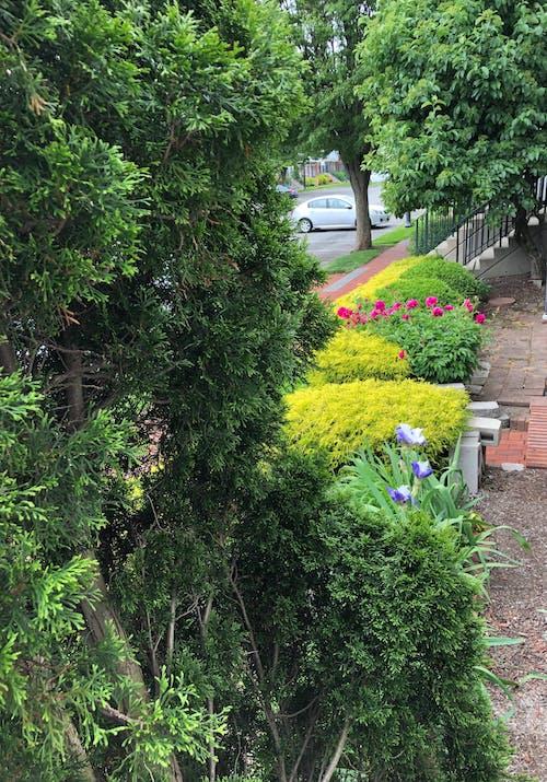 Free stock photo of garden flowers, spring garden