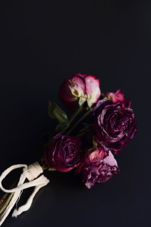Darmowe zdjęcie z galerii z flora, kwiaty, kwitnąć, płatki