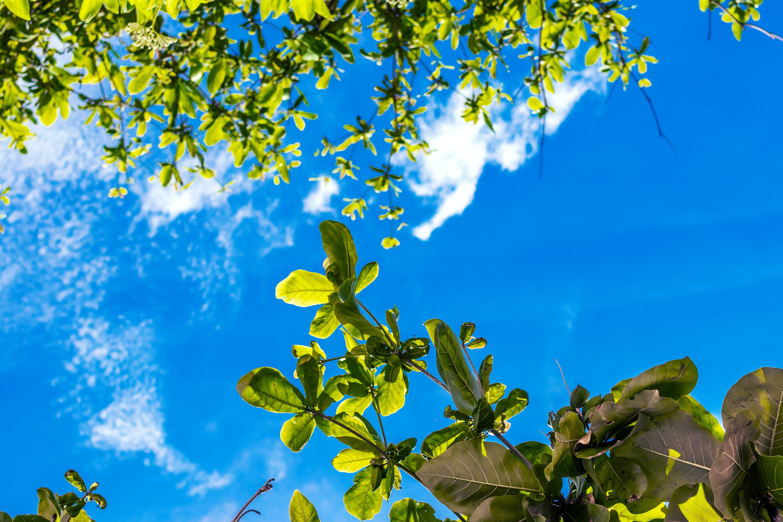 Kostnadsfri bild av abstrakt, bakgrund, blå, blad