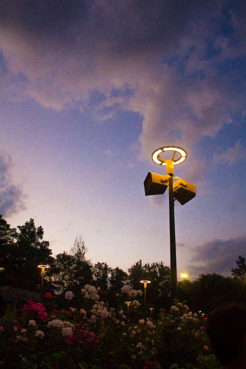 가벼운, 경치, 공원, 구름의 무료 스톡 사진