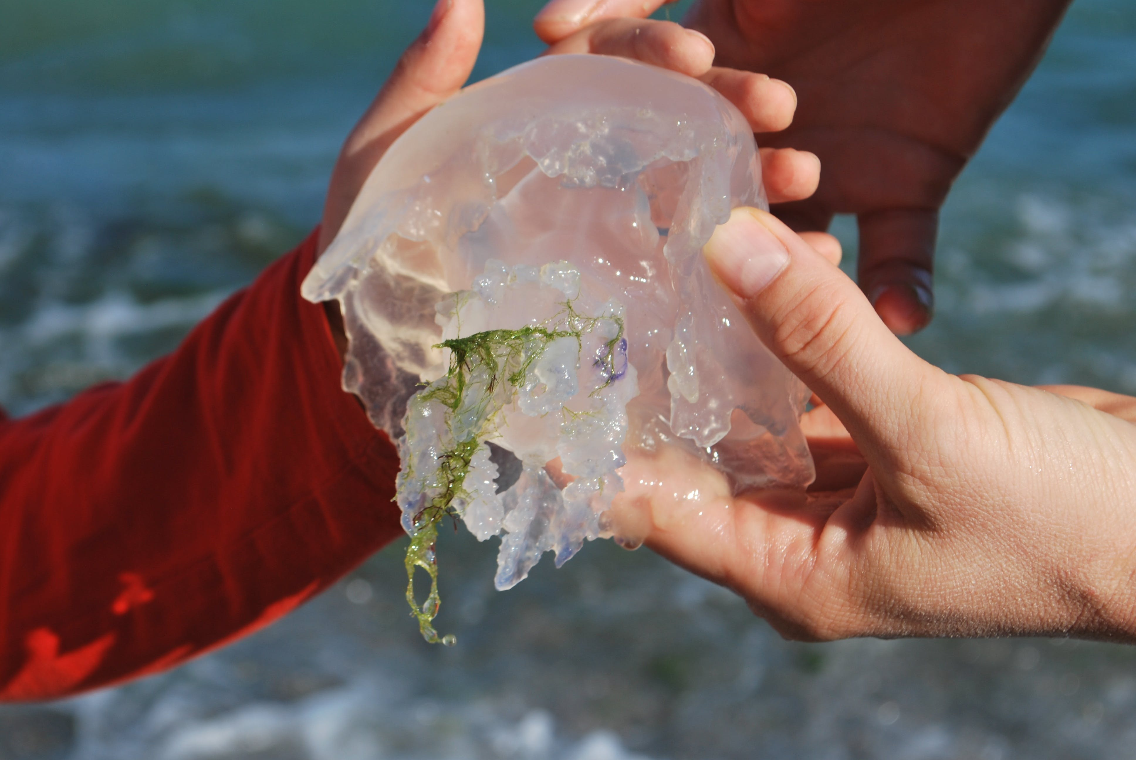 Person Holding Jellyfish
