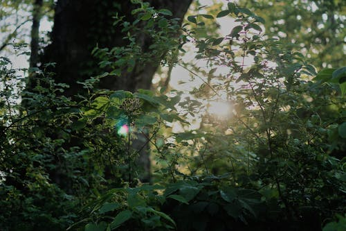 Foto d'estoc gratuïta de bosc, natural