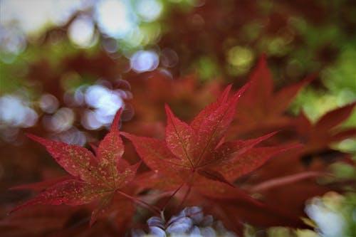 Foto d'estoc gratuïta de flor vermella, mare naturalesa, natural