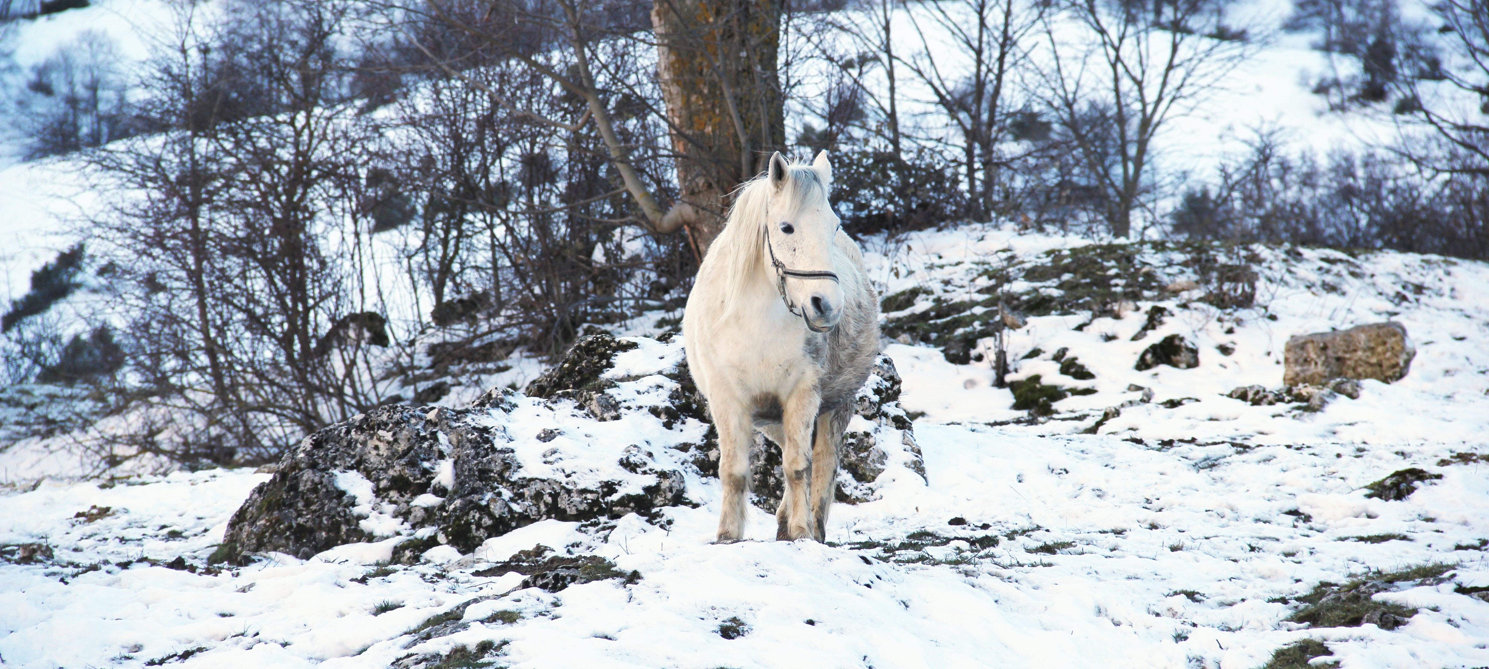 White Horse on White Snow