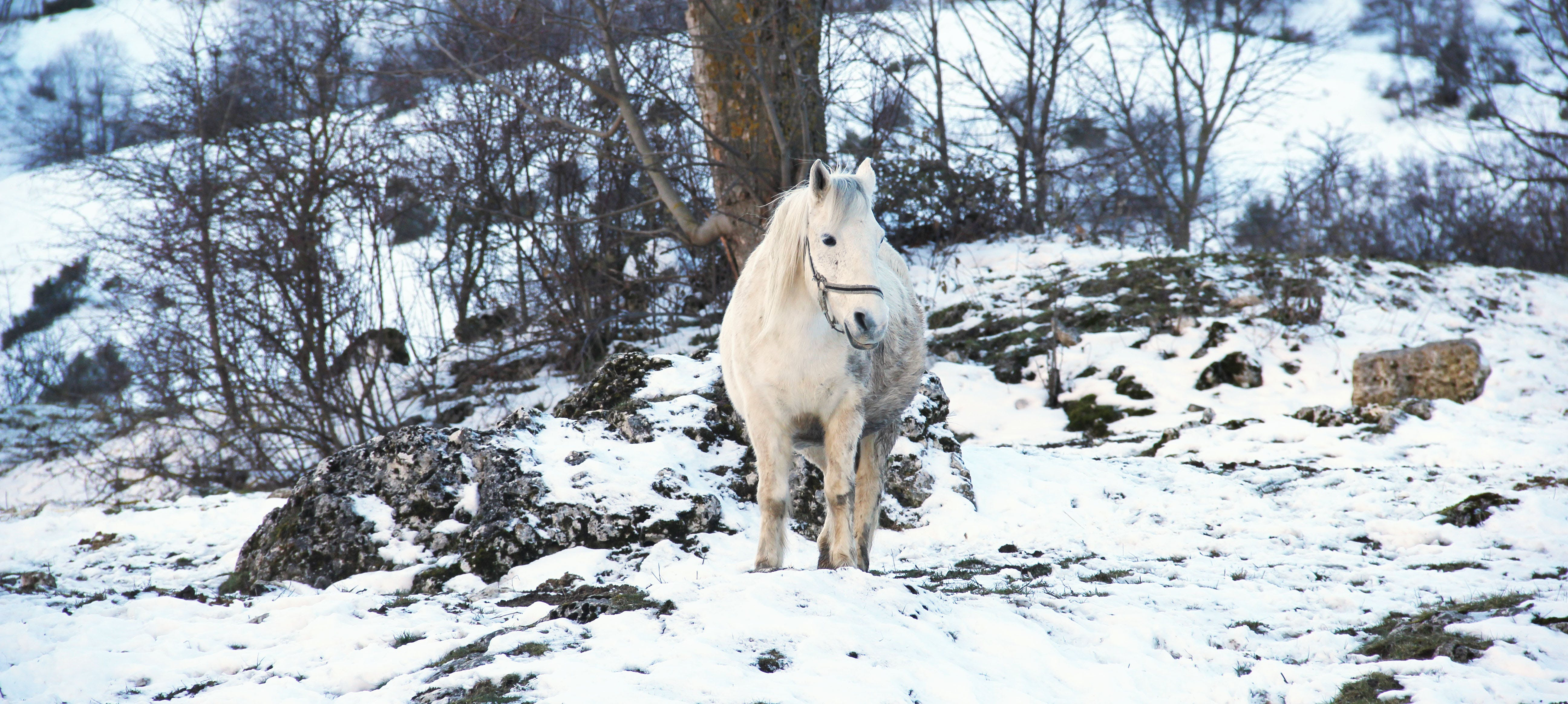 White Horse on White Snow