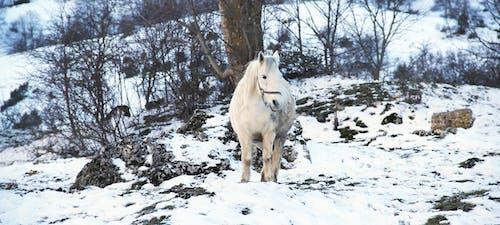 Imagine de stoc gratuită din animal, anotimp, arbore, cal