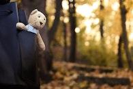 cute, teddy bear, toy