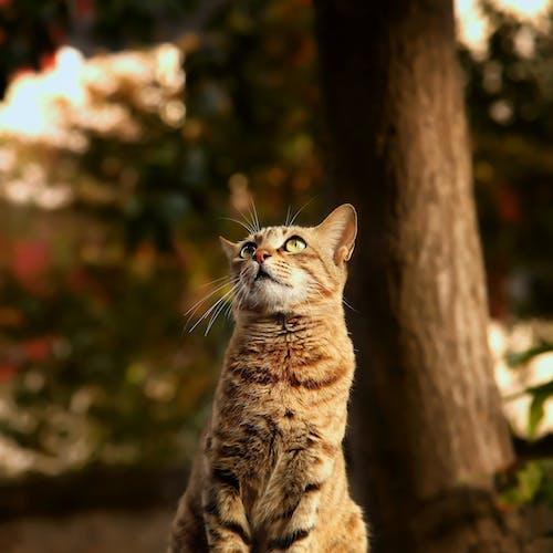 Gratis stockfoto met aanbiddelijk, beest, dierenfotografie, gestreepte kat