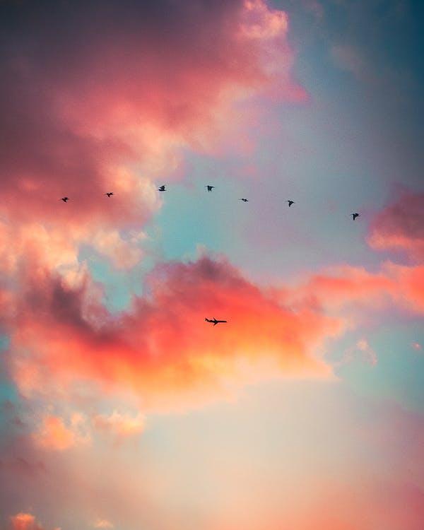 dopravní letoun, fotografování zvířat, hejno