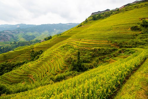 Free stock photo of china, guilin, rice terraces