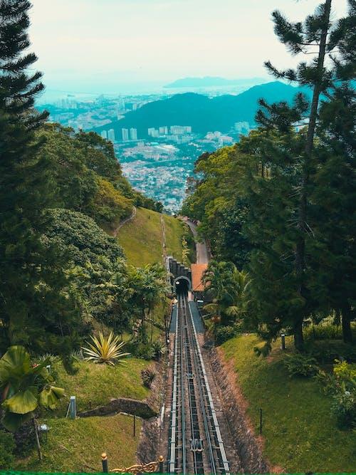 Free stock photo of green forest, Malaysia, penang, pulaupinang