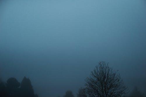 감기, 나무, 날씨, 안개의 무료 스톡 사진