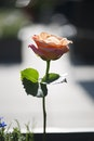 love, petals, blur