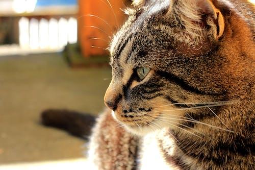 Fotobanka sbezplatnými fotkami na tému detailný záber, domáce zviera, mačací, mačiatko
