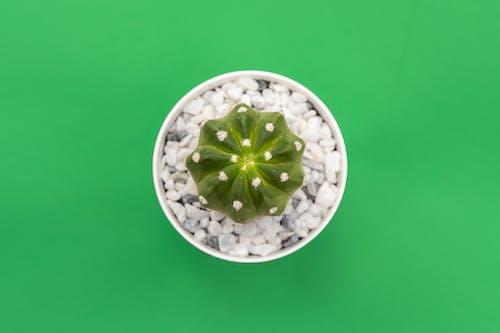 Photos gratuites de cactus, couvert d'épines, décoration, décoration d'intérieur