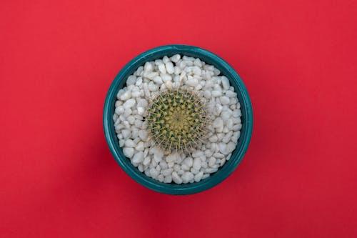 Kostenloses Stock Foto zu aufsicht, cactuses, dekoration, kaktus