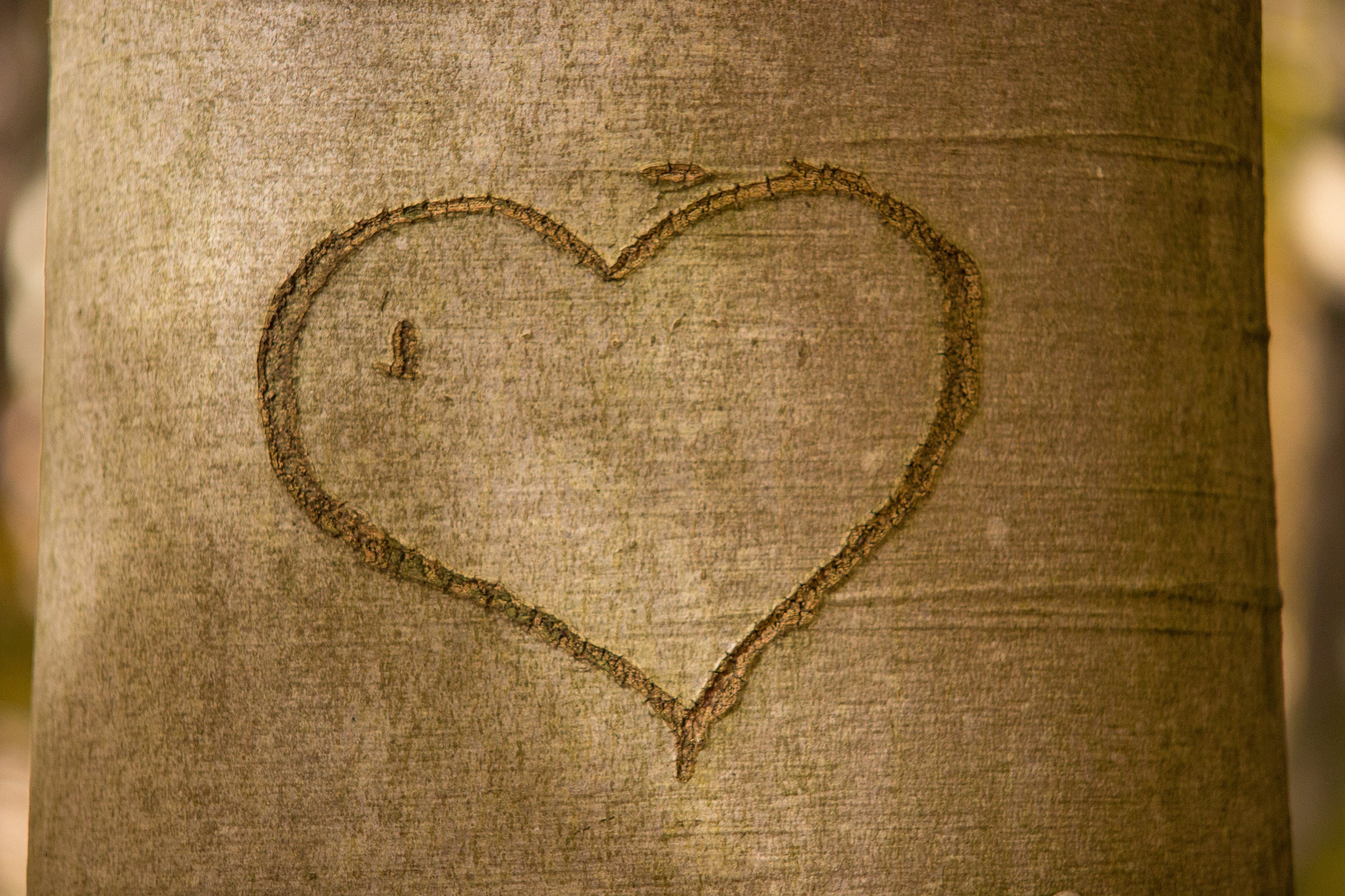 Brown Tree Husk With Heart in Close-up Photo