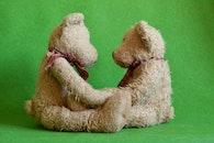 niedlich, teddy, teddybären