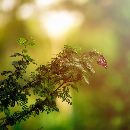Free stock photo of art, art background, artist, beauty in nature