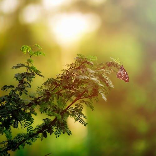Ingyenes stockfotó eső, esős nap, fű, füves terület témában