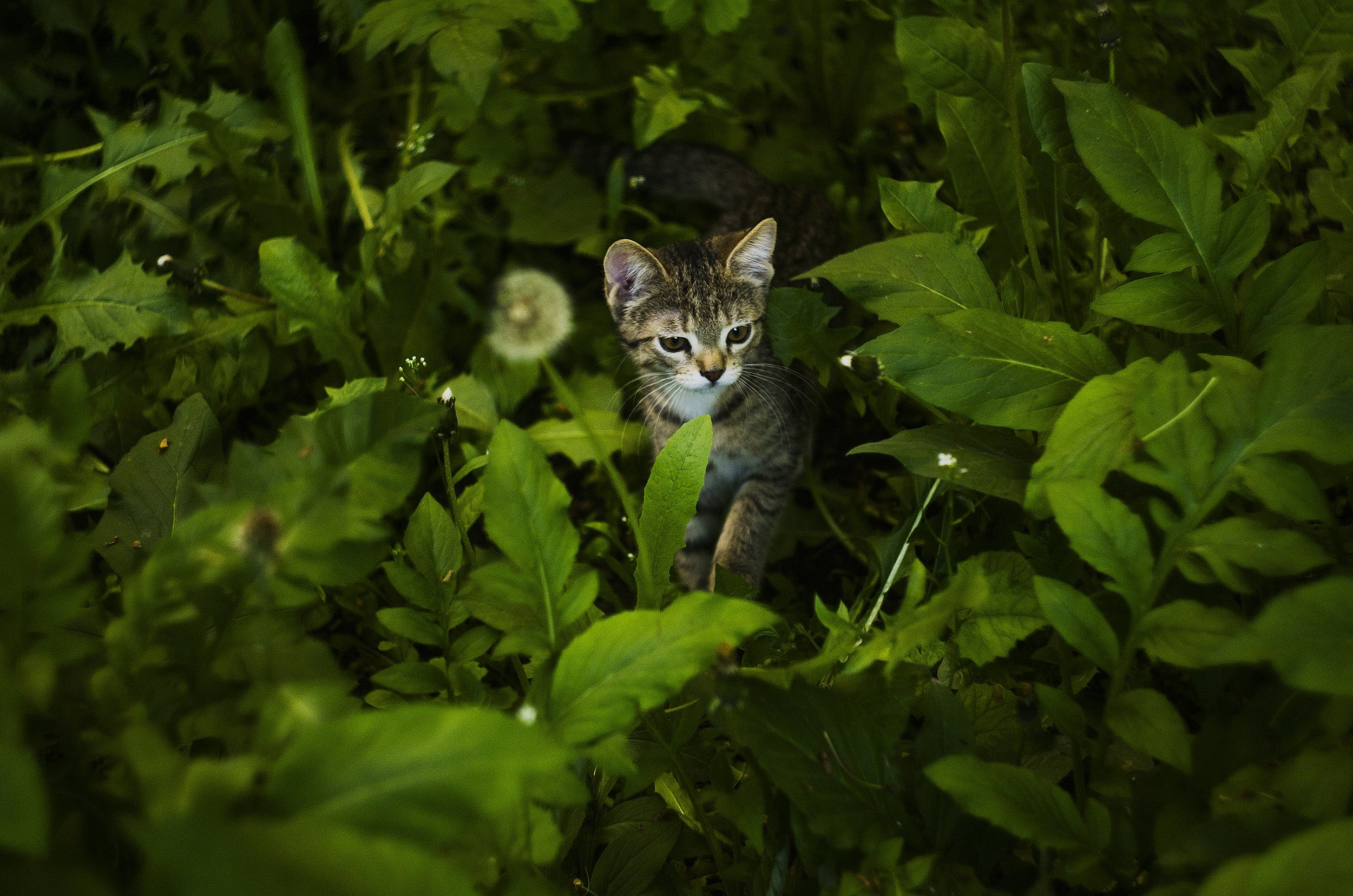 Short-fur Black and Brown Kitten Surrounded by Green Leafed Plants