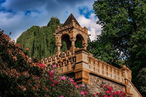 Free stock photo of dramatic sky, flowers, germany, gothic