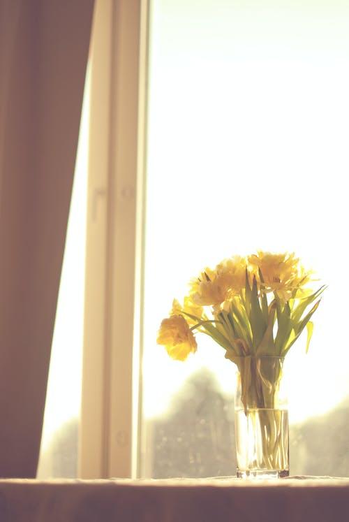 Darmowe zdjęcie z galerii z bukiet, jasny, kwiaty, martwa natura