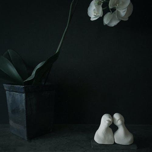 Darmowe zdjęcie z galerii z ciemny, czarny, kwiat, martwa natura