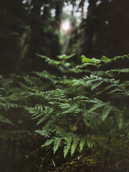 Gratis stockfoto met bomen, Bos, buiten, dageraad