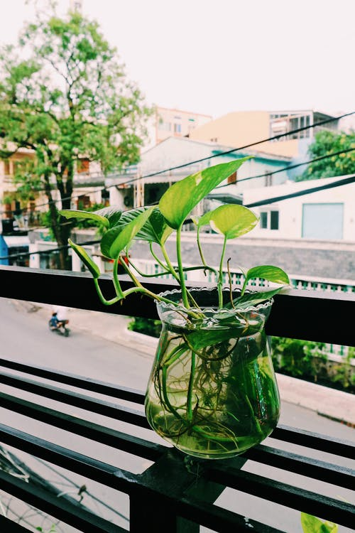 Foto profissional grátis de folhas, planta, planta de casa, planta de interior