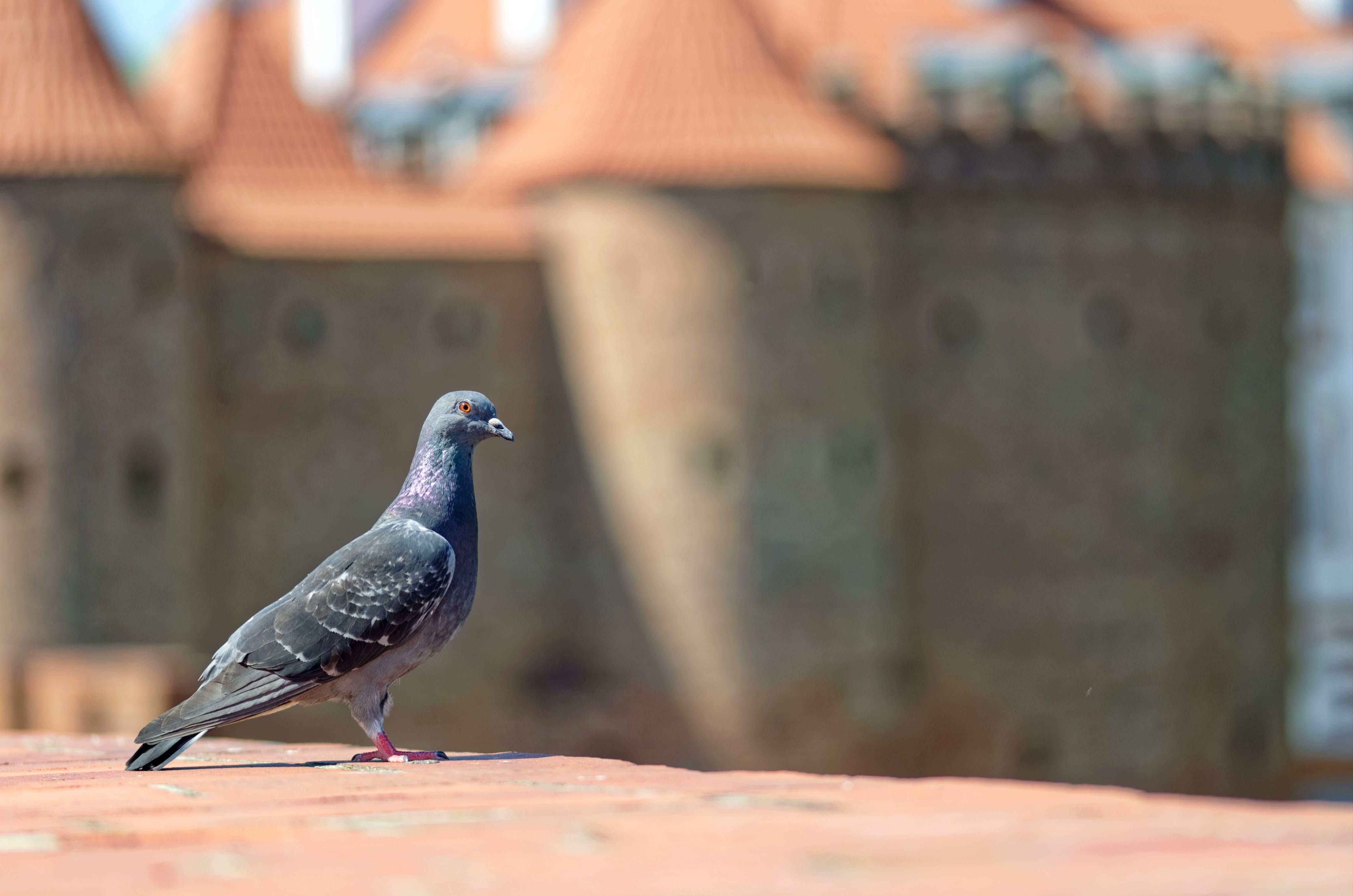 Foto profissional grátis de ave, castelo, coberturas, construção