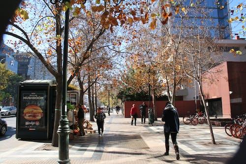 Free stock photo of autumn, chile, city, city center