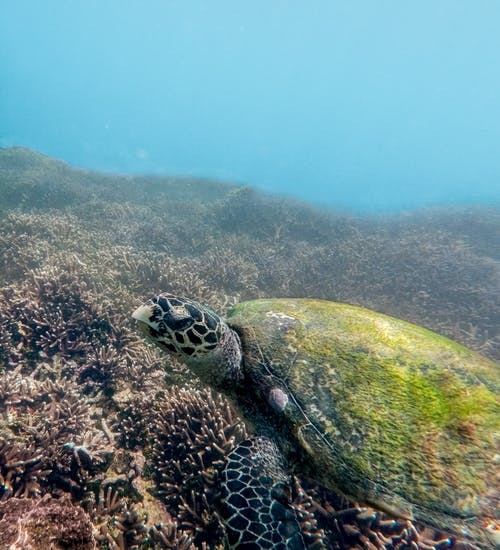 Sea Turtle Swimming Under the Sea