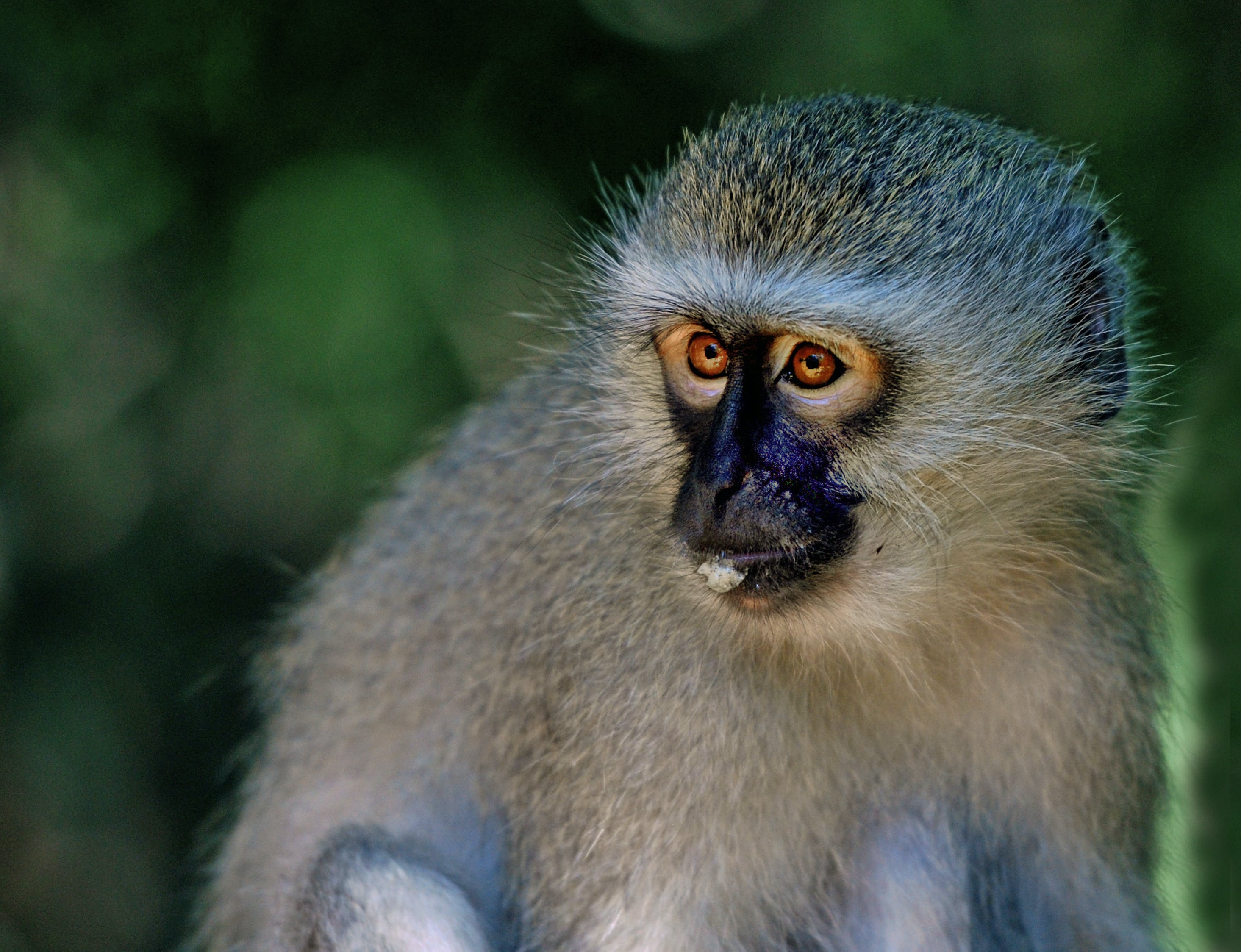 Gratis lagerfoto af abe, bavian, dyr, dyreliv