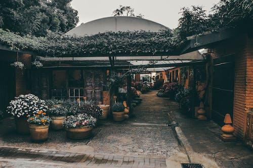 Gratis stockfoto met architectuur, bloemen, buiten, fabrieken