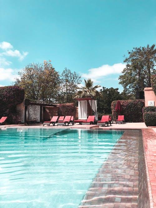 Darmowe zdjęcie z galerii z basen, drzewa, dzień, hotel