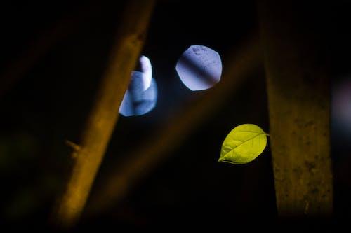 Základová fotografie zdarma na téma město, noc, strom, umění