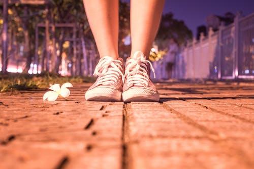 Základová fotografie zdarma na téma holinka, holka, kytka, noc