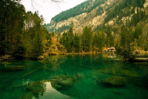 Fotos de stock gratuitas de a orillas del lago, bosque, bucle, escénico