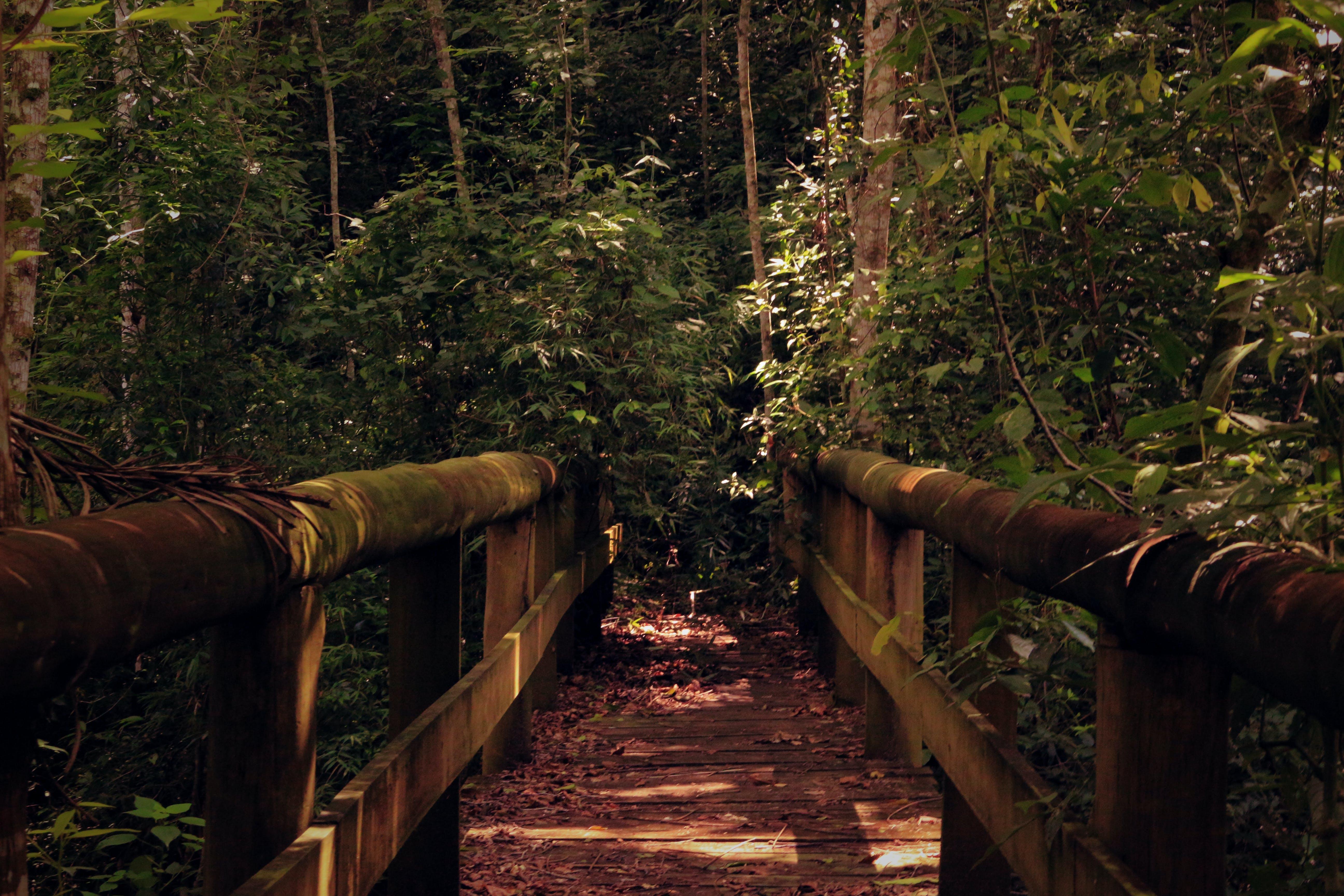 Empty Brown Wooden Foot Bridge