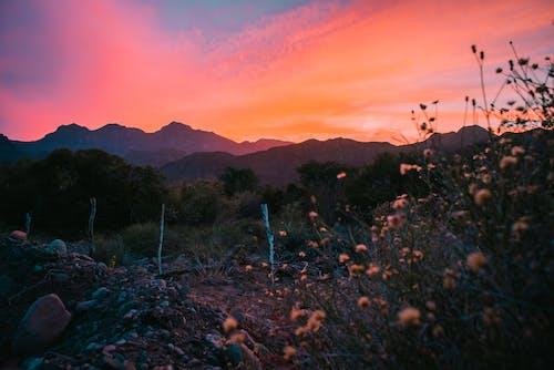 Free stock photo of beautiful mountain, blue, blue mountains, flowers