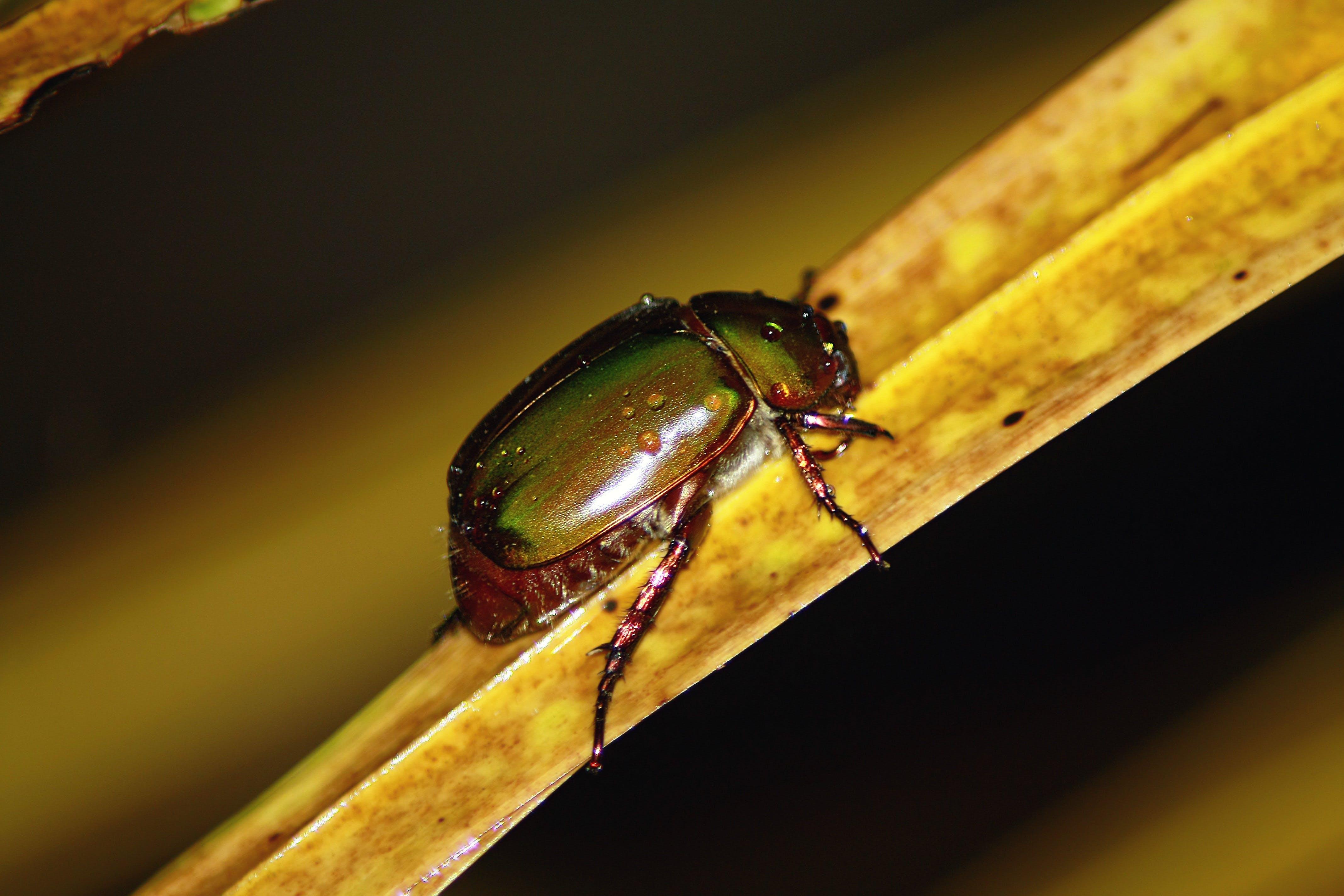 Black and Green Beetle on Brown Leaf