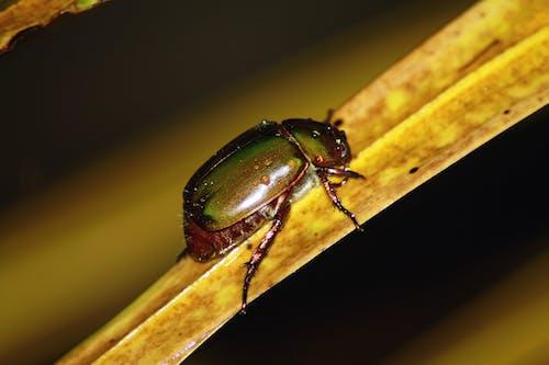 Fotobanka sbezplatnými fotkami na tému chrobák, detailný záber, hmyz, makro