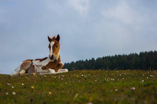 動物, 哺乳動物, 天空, 家畜 的 免费素材照片