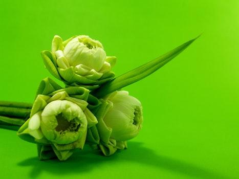 Free stock photo of flowers, summer, garden, petals