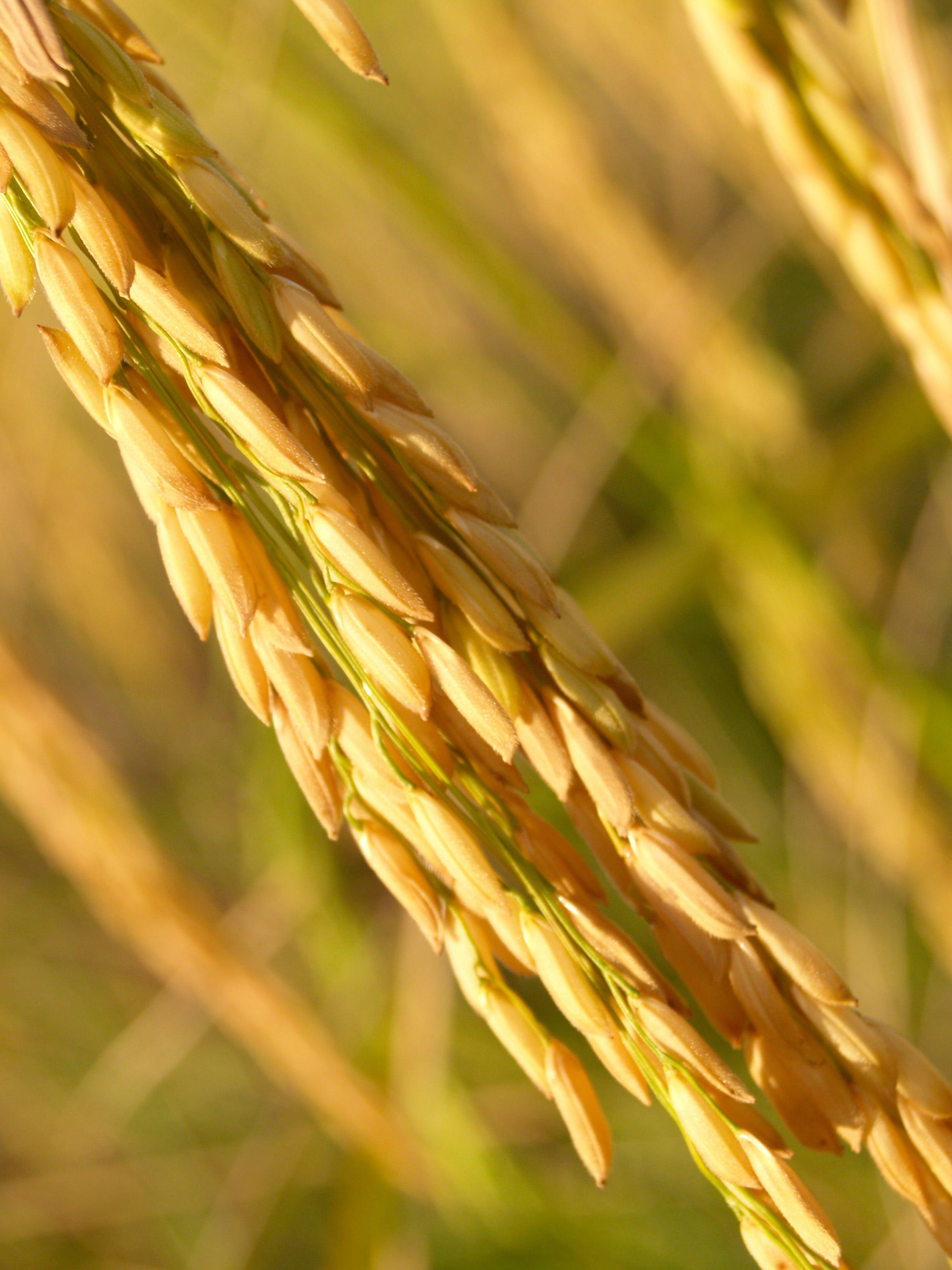 Selective Photography of Wheath