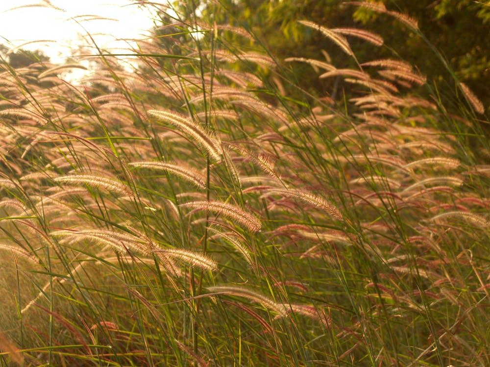 a l'aire lliure, blat, bonic